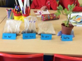 'P4/5 We've bean busy STEM investigation'